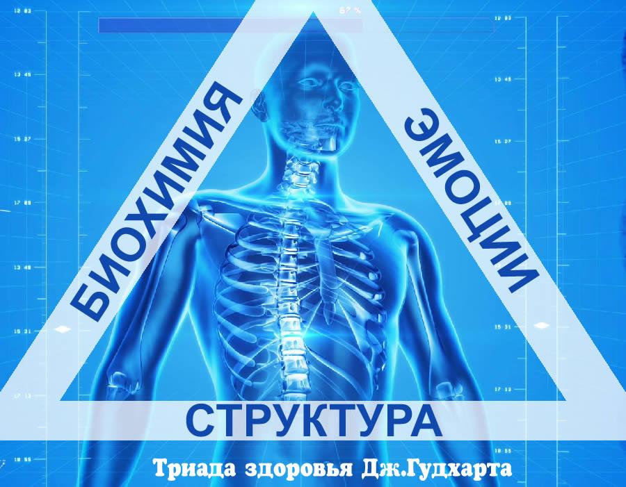 prikladnaya kineziologiya